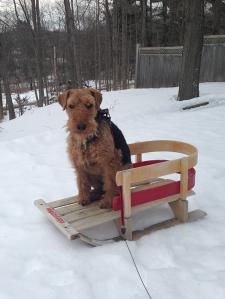 Mr Jones on a sled