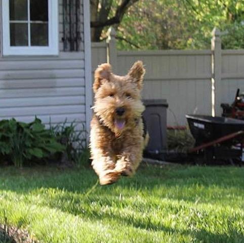Cooper_Flying